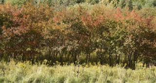 Forest landscapes 0021