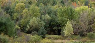 Forest landscapes 0022
