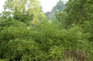 Forest landscapes 0023