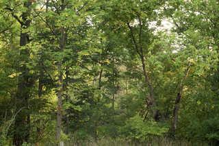 Texture of /landscapes/forest-landscapes/forest-landscapes_0023_02