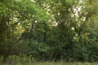 Texture of /landscapes/forest-landscapes/forest-landscapes_0023_03