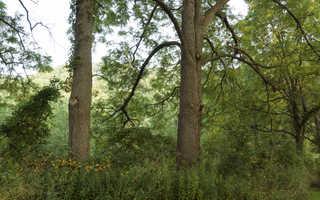 Texture of /landscapes/forest-landscapes/forest-landscapes_0023_04