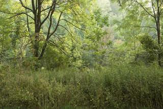 Texture of /landscapes/forest-landscapes/forest-landscapes_0023_05