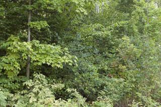 Forest landscapes 0024