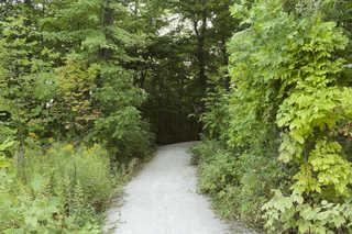 Forest landscapes 0025