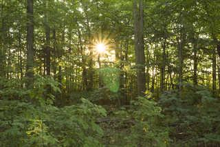Forest landscapes 0026
