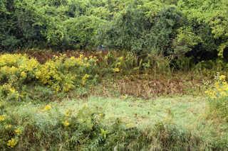 Forest landscapes 0027