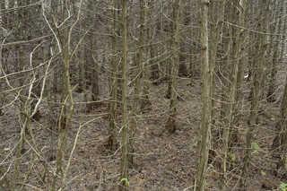 Forest landscapes 0028