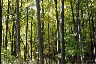 Forest landscapes 0029