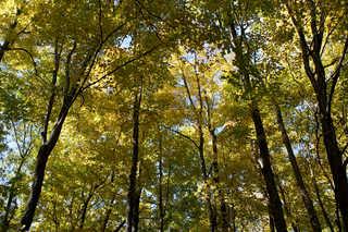 Forest landscapes 0030
