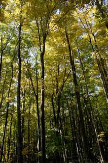 Texture of /landscapes/forest-landscapes/forest-landscapes_0030_02