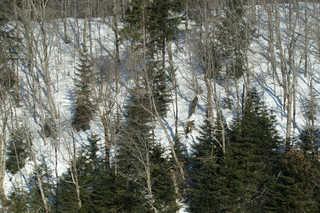 Forest landscapes 0031
