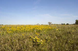 Plains landscapes 0002