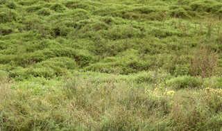 Plains landscapes 0003