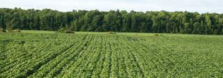 Plains landscapes 0007