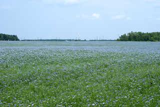 Plains landscapes 0011