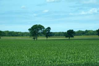 Plains landscapes 0012