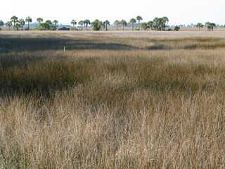 Plains landscapes 0013