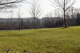 Rolling hill landscapes 0006