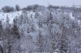 Winter landscapes 0004