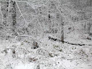 Winter landscapes 0005