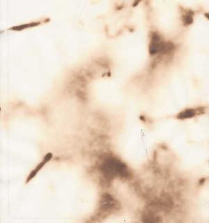 Burnt paper 0004