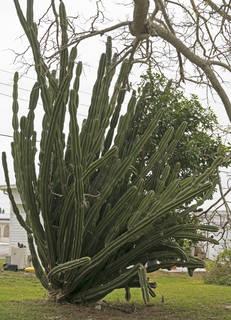 Cactus 0007