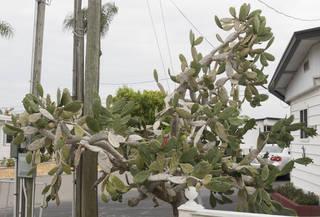 Cactus 0008