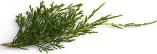 Texture of /plants/conifer-cones-and-needles/conifer-cones-and-needles_0003_05