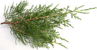Texture of /plants/conifer-cones-and-needles/conifer-cones-and-needles_0003_09
