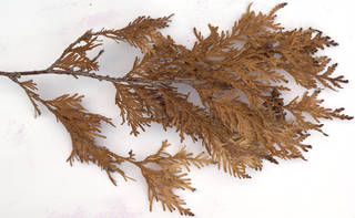 Texture of /plants/conifer-cones-and-needles/conifer-cones-and-needles_0026_05
