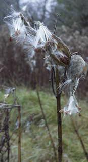 Dead plants 0004