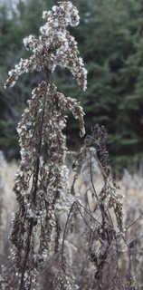 Dead plants 0005