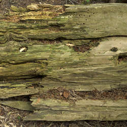 Decomposing Tree Trunks Category