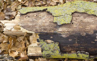 Decomposing tree trunks 0003