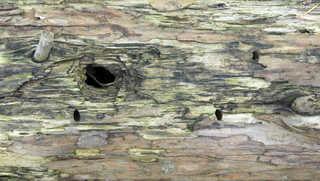Decomposing tree trunks 0006