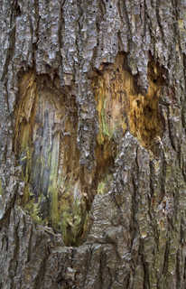 Decomposing tree trunks 0008