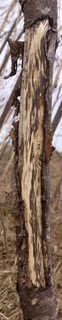 Decomposing tree trunks 0018