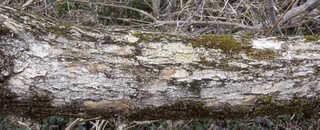Decomposing tree trunks 0022