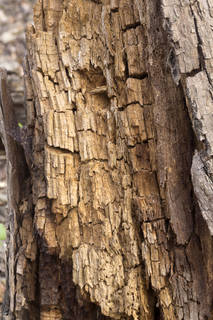 Decomposing tree trunks 0027