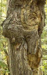 Decomposing tree trunks 0031