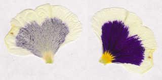 Flowers 0002