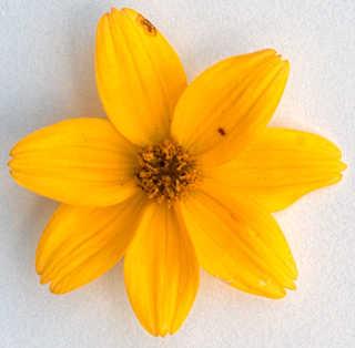 Flowers 0012