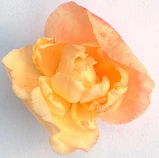 Flowers 0014