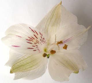 Flowers 0021