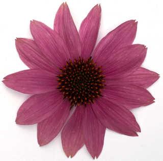 Flowers 0022