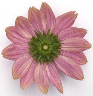 Flowers 0024