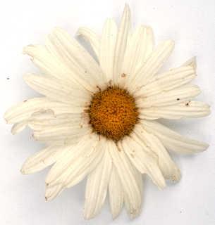 Flowers 0025