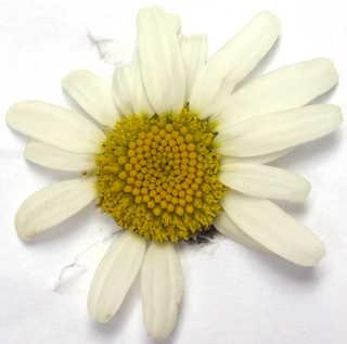 Flowers 0030