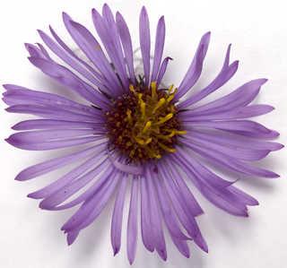 Flowers 0031